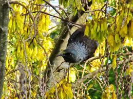 new zealand native plants and trees new zealand natives kiwiyarns knits