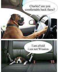 Dog Driving Meme - 20 funny memes of cats dogs and moving vehicles i can has