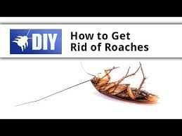 How To Get Rid Of Roaches In The Bathroom Best 25 Killing Roaches Ideas On Pinterest Roaches Roach