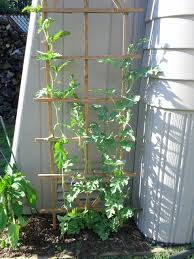 Growing Melons On A Trellis Growing Watermelons Vertically Learning As I Go