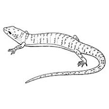 coloring page for toddlers 10 best gecko coloring pages for toddlers