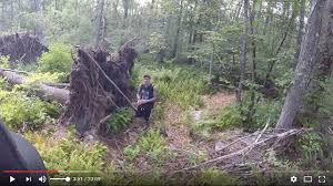 Haunted in freetown state forest cursed forest of massachusetts