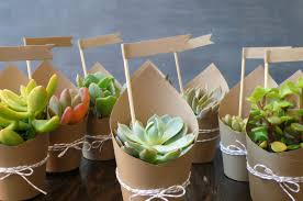 Online Shopping Sites Home Decor Buy Plants Online Delhi Best Online Plant Nursery In India