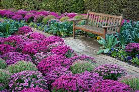 flowering kale arrangements margarite gardens