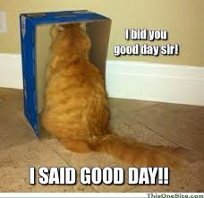 Good Day Sir Meme - ending an argument by screaming i said good day sir home