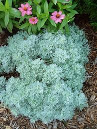 Flowering Shrubs That Like Full Sun - 25 unique zone 9 gardening ideas on pinterest purple flowering