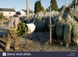 trees on sale wrapping a tree in plastic netting