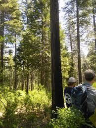 California Wildfire Database by Blog U2014 California Fire Science Consortium