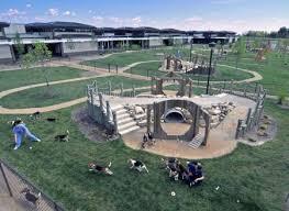 Dog Playground Equipment Backyard by Best 25 Dog Park Ideas On Pinterest Dog Daycare Daycare For