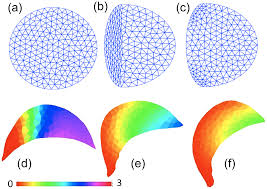 a comparison of computational models for eukaryotic cell shape and