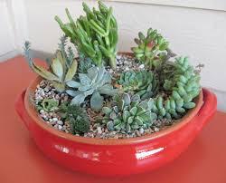 Dish Garden Ideas Succulents Living Nest Pinterest Dish Garden Gardens And Cacti