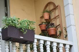 Small Trellis Planter Do More With Less On A Balcony Garden U2014 Timber Press