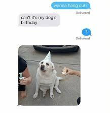 Birthday Meme Dog - 25 best memes about dog birthday dog birthday memes