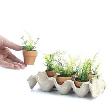 indoor plants singapore small potted plants small indoor plants for office desk small form