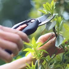 Landscaping Company In Miami by Tree Service Yard Maintenance Miami Lawn Care Company