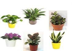 Plants For Office Great Low Maintenance Plants For Office The Best Indoor Plants For