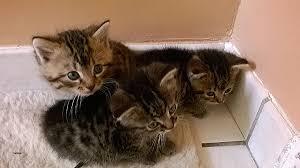 comment eviter les griffes de sur canape comment eviter les griffes de sur canape fresh donne chatons