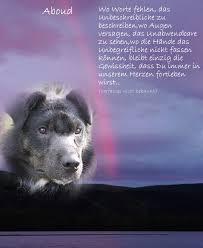 sprüche hund treue mein lhasa apso oscar regenbogenbrücke