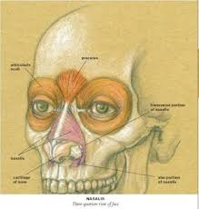 Google Human Anatomy 137 Best Anatomy Images On Pinterest Anatomy