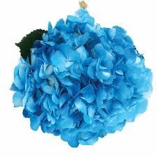blue flowers for wedding blue flowers for wedding bloomsbythebox