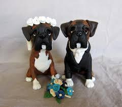 10 boxer dog facts boxer dog photos boxer dog info and health tips