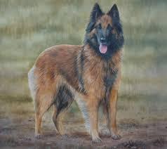 belgian sheepdog gif belgian shepherd art prints mick cawston sue driver steven nesbitt