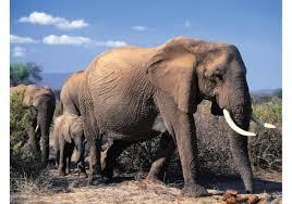 elephant free vector art 6624 free downloads