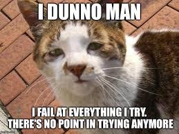 Depressed Cat Meme - depressed cat imgflip