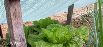 Shade Cloth Protecting Your Plants by Protecting The Plants In Your Vegetable Garden