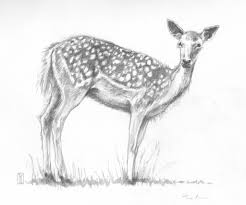 animal pencil drawing of deer sketches of animals sketches and