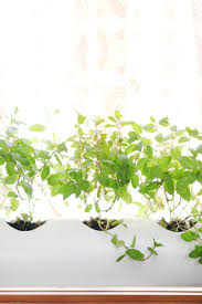 Window Sill Herb Garden by Make A Floating Pvc Window Planter U2013 A Beautiful Mess
