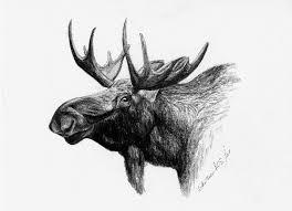 moose head limited edition print black u0026 white drawing