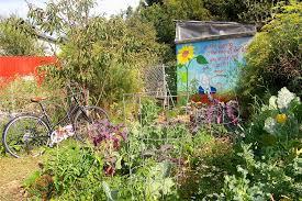 future uncertain for berkeley community garden u2014 berkeleyside