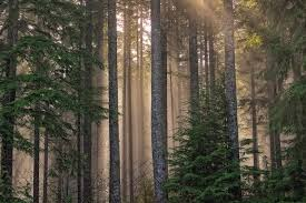 Washington Forest images Capitol state forest washington state wiki fandom powered by wikia