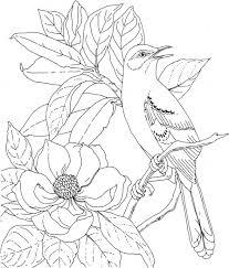 mockingbird magnolia mississippi bird flower 7908