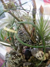 worcester florists sprout air plants and terrariums