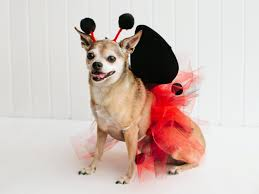 Ghost Dog Halloween Costumes 19 Diy Pet Costumes Halloween Hgtv