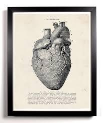 human heart anatomy home kitchen nursery bath dorm