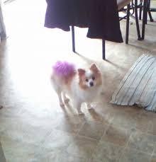 karen u0027s pampered pets grooming u0026 boarding home facebook