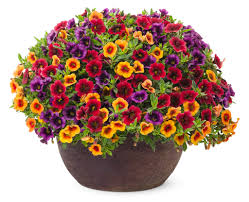 container gardening in fall proven winners