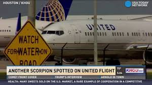 United Oversize Baggage by Scorpion Spotted On United Flight Again Youtube