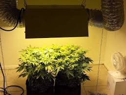 which reflector is best for my mh hps grow light grow weed easy