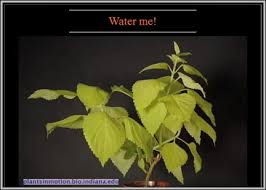 it up capillary action of water in plants
