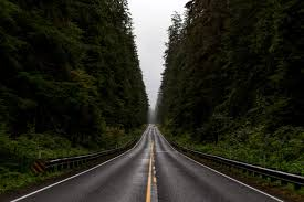 Washington Forest images Road corridor through olympic national forest washington image jpg