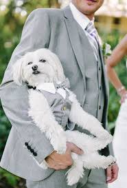 ways to include pets in your wedding brides