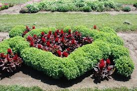 cheap flower bed ideas fabulous cheap garden ideas instead of