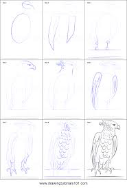 how to draw a harpy eagle printable step by step drawing sheet