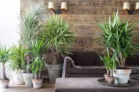 pflanzen für schlafzimmer haus renovierung mit modernem innenarchitektur schönes pflanzen