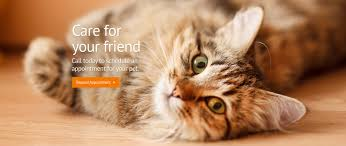 paws around town mobile veterinary hospital veterinarian in
