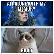 Musical Memes - cats the musical memes google search grumpy cat pinterest
